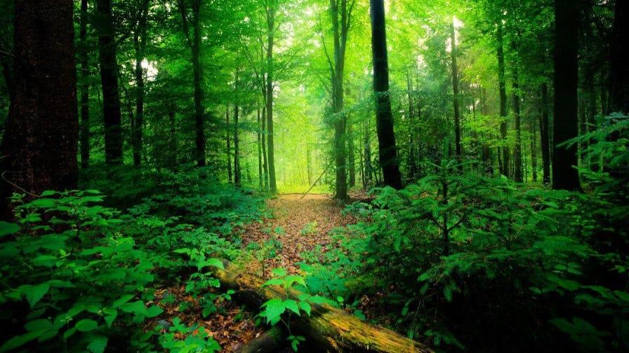 Tree Canada trees
