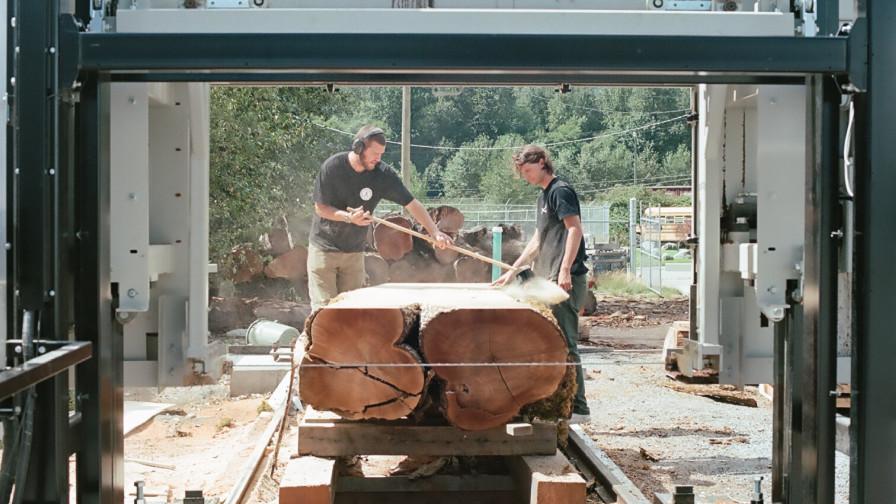 Crotched wood cut on Wood-Mizer WM1000 sawmill