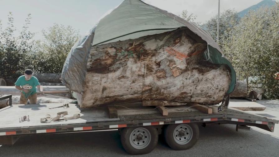 Massive log loaded onto truck